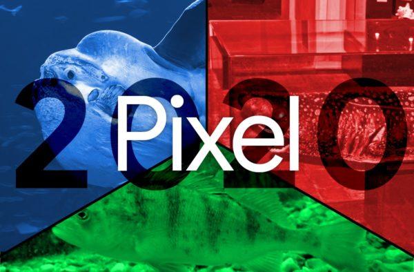 Google Pixel 2020